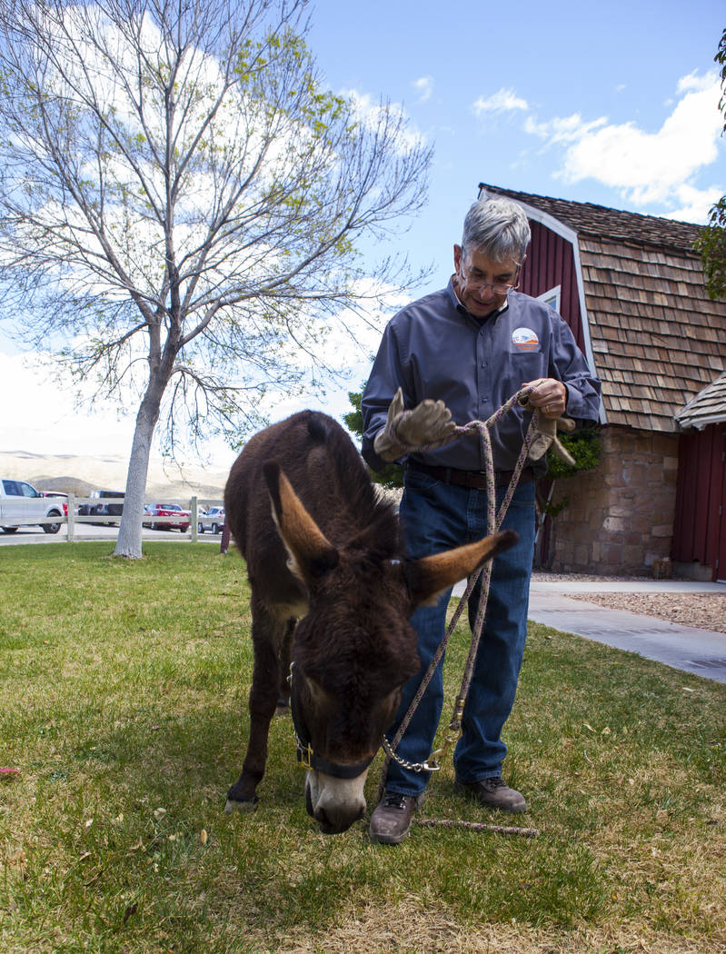 Jackson, a formerly wild Burro who was adopted by the Red Rock Canyon Interpretive Association, and Blaine Benedict during the Mojave Spring Fling Festival at Spring Mountain Ranch State Park on S ...