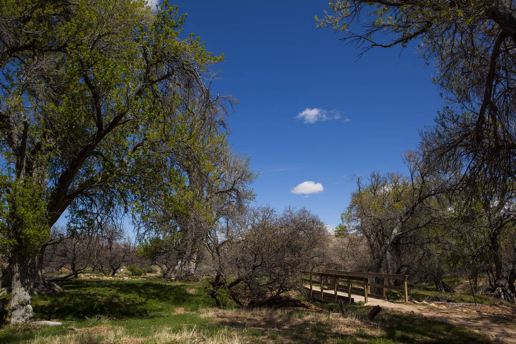 The Ash Grove trail during the Mojave Spring Fling Festival at Spring Mountain Ranch State Park in on Saturday, April 1, 2017. (Miranda Alam/Las Vegas Review-Journal) @miranda_alam