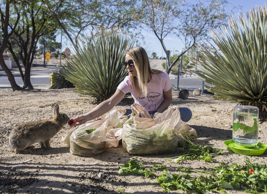 "Stacey Taylor, a volunteer with ""Bunnies Matter,"" feeds feral rabbits in a field east of CSN Library on Sunday, April 2, 2017, in Las Vegas. Benjamin Hager Las Vegas Review-Journ ..."