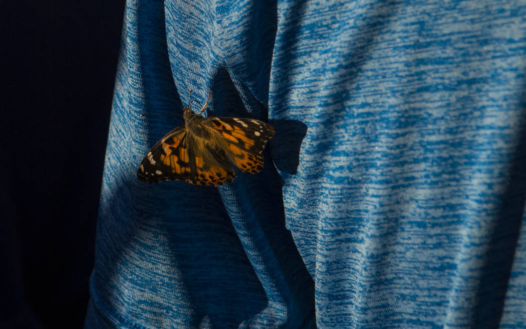 A butterfly lands on the shirt of an attendee during an event honoring World Autism Awareness Day outside of The Venetian hotel-casino in Las Vegas on Sunday, April 2, 2017. (Chase Stevens/Las Veg ...