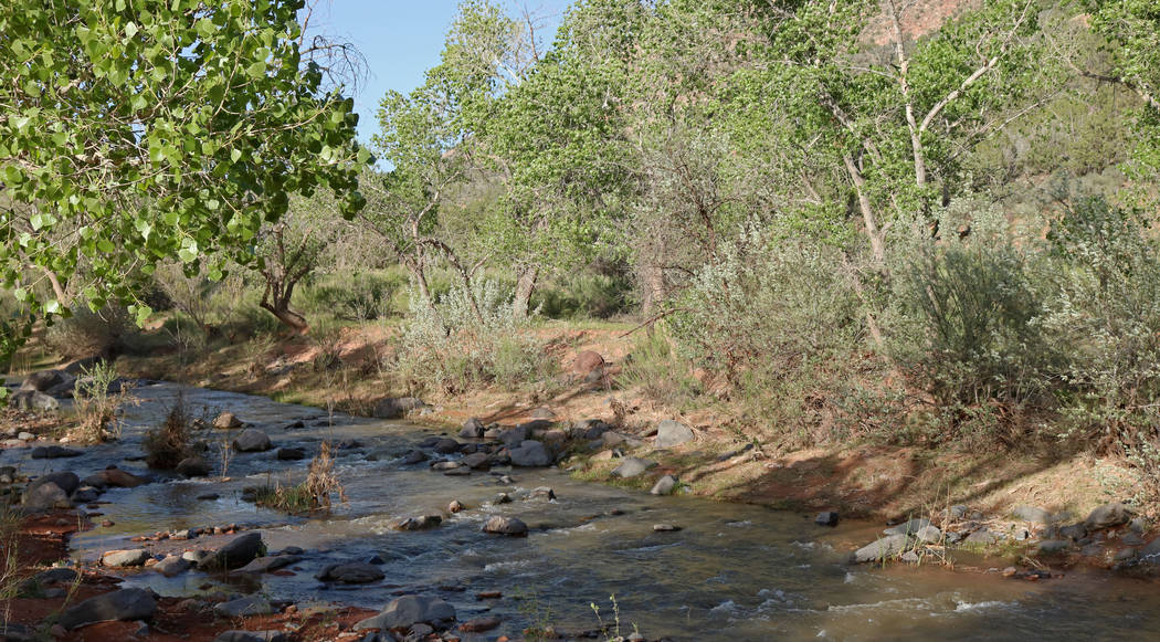 A creek that flows parallel to Brent Fitzpatrick's land west of Zion National Park, Thursday, April, 13, 2017. Gabriella Benavidez Las Vegas Review-Journal @gabbydeebee