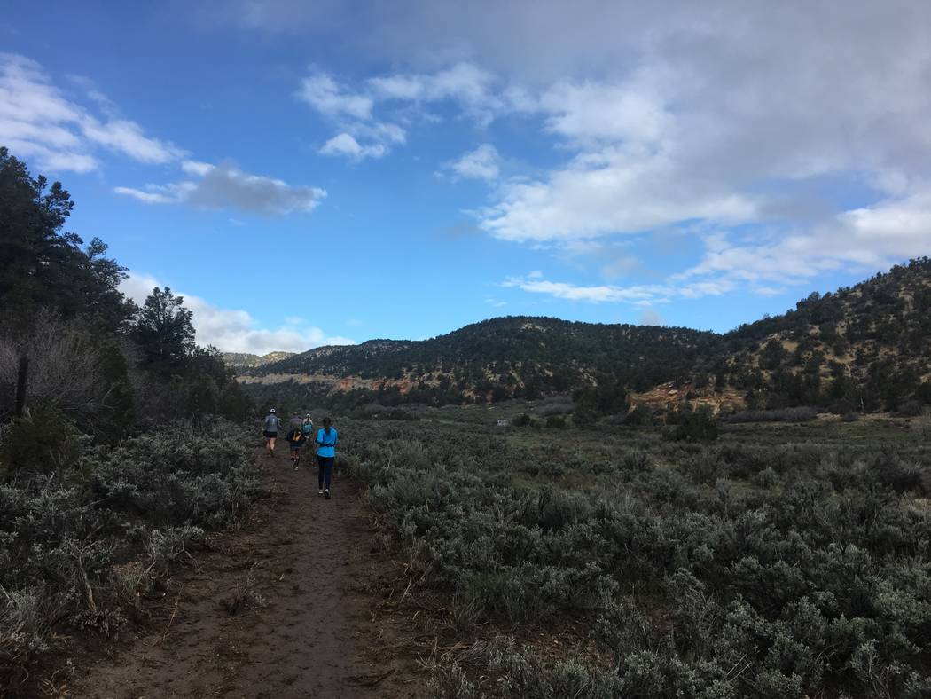The 13.1-mile course takes runners through the forests just outside the east entrance to Zion National Park. Sarah Corsa/Las Vegas Review-Journal.