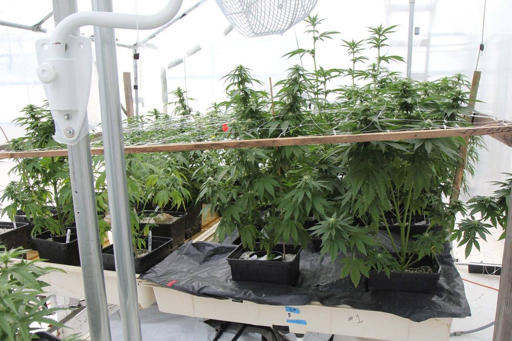 Arizona Authorities Bust Pot Growing Production Operation