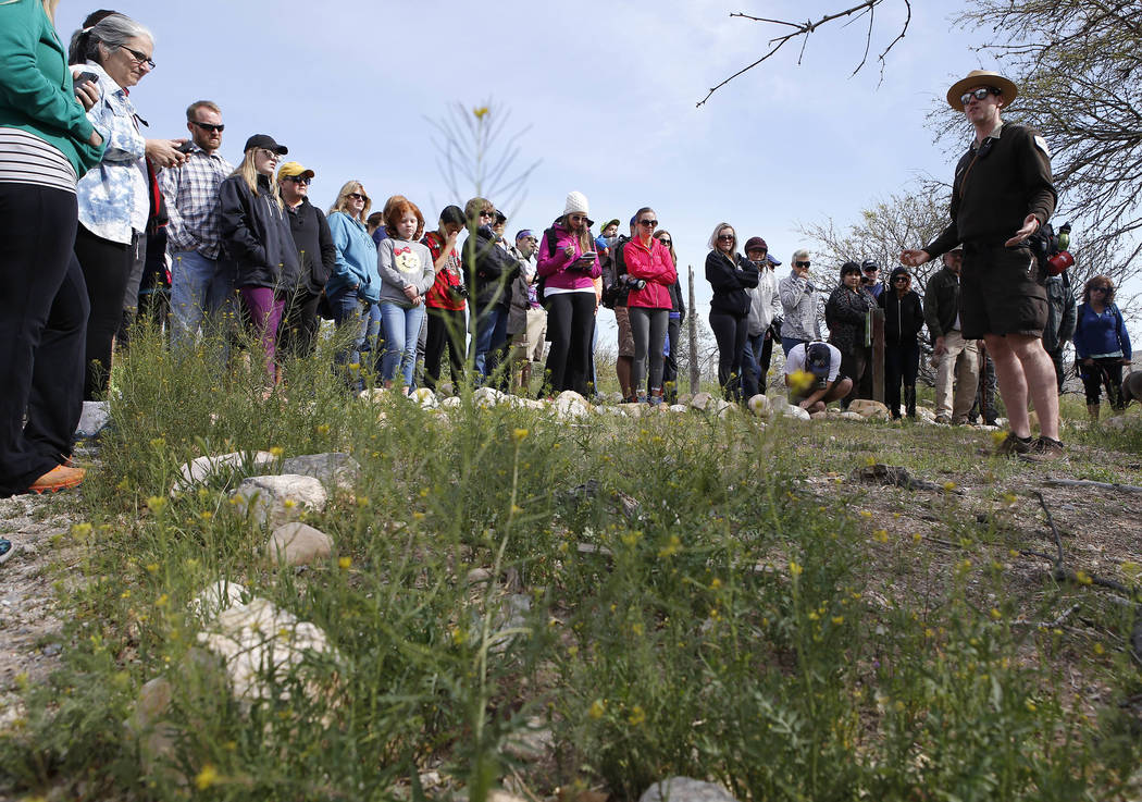 Park Interpreter David Low, right, shows visitors wild radish on a hiking tour that he is leading at the Spring Mountain Ranch State Park on Sunday, April 9, 2017, near Red Rock Canyon. Low explai ...