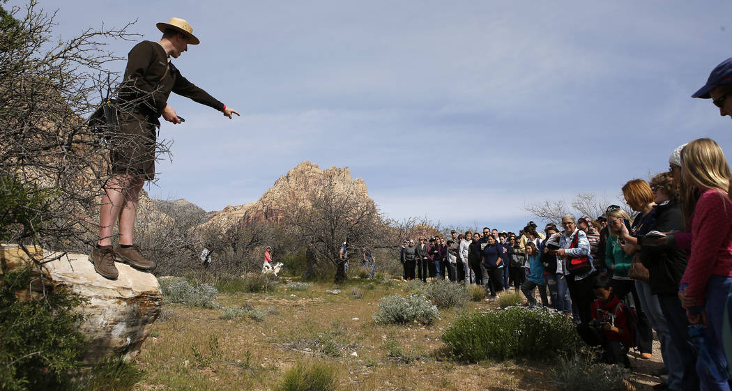 Park Interpreter David Low points to amsonia bushes during a hiking tour that he is leading at the Spring Mountain Ranch State Park on Sunday, April 9, 2017, near Red Rock Canyon. (Christian K. Le ...