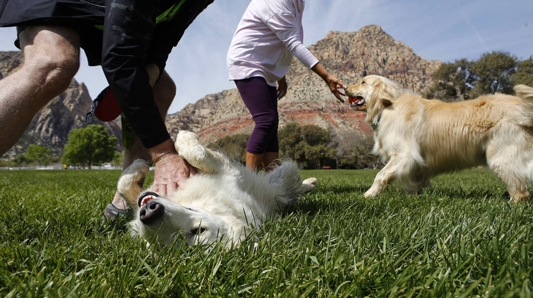 Pet dogs Maxim, from left, and Jaxon play at a park area at the Spring Mountain Ranch State Park on Sunday, April 9, 2017, near Red Rock Canyon. (Christian K. Lee Las Vegas Review-Journal @chriskl ...