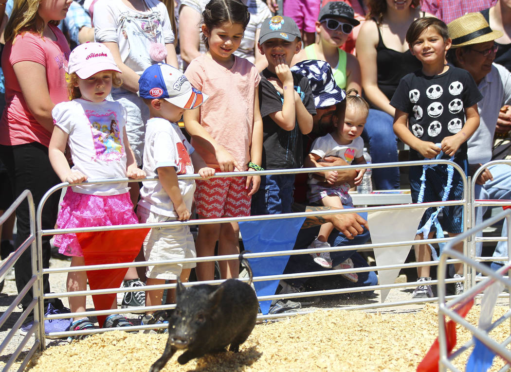 Children watch a pig race during the first day of the Clark County Fair and Rodeo in Logandale on Wednesday, April 12, 2017. Chase Stevens Las Vegas Review-Journal @csstevensphoto