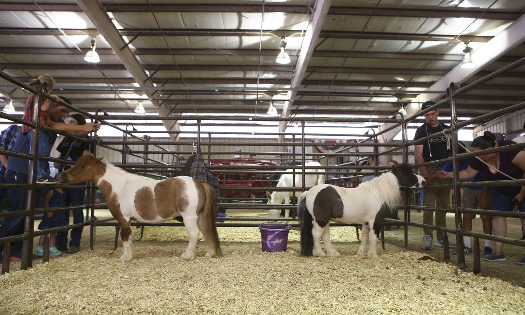 People pet miniature horses in the agriculture and small animal building during the first day of the Clark County Fair and Rodeo in Logandale on Wednesday, April 12, 2017. Chase Stevens Las Vegas  ...