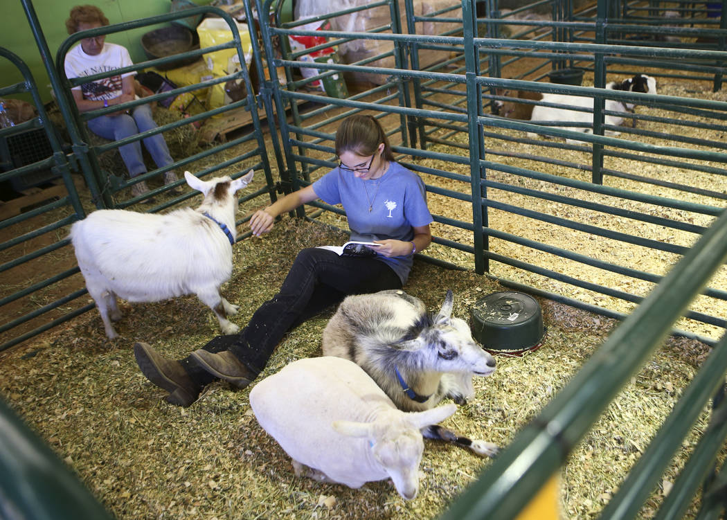 Sarah Adams keeps watch over goats while reading a book in the agriculture and small animal building during the first day of the Clark County Fair and Rodeo in Logandale on Wednesday, April 12, 20 ...