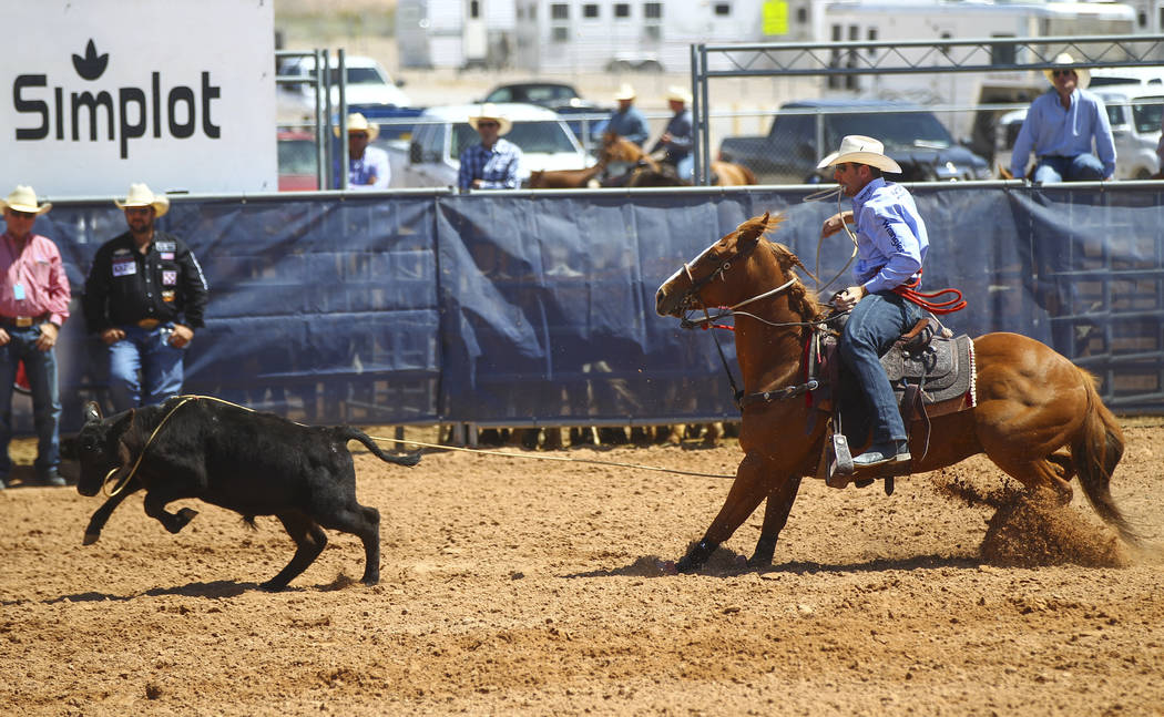 A tie-down roping event during the first day of the Clark County Fair and Rodeo in Logandale on Wednesday, April 12, 2017. Chase Stevens Las Vegas Review-Journal @csstevensphoto