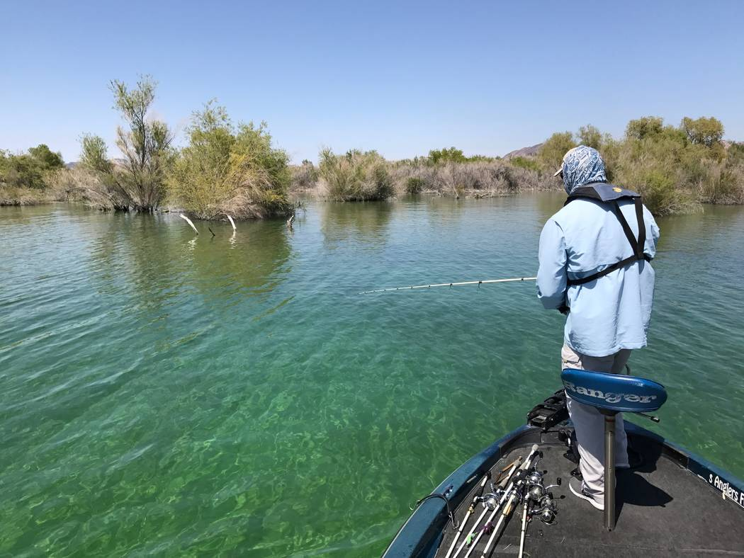 Roger Williams of Henderson works the shallow waters of Lake Mohave in search of large smallmouth bass for which the reservoir is earning a well deserved reputation. Photo by Doug Nielsen.