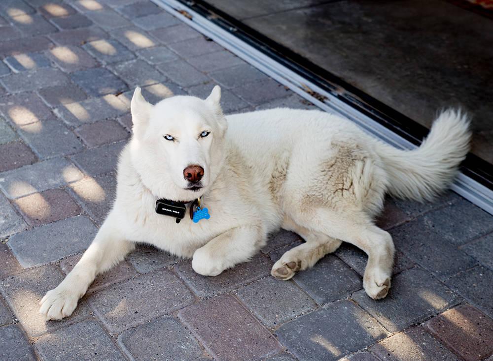 Guy Pinjuv's dog. (Tonya Harvey)