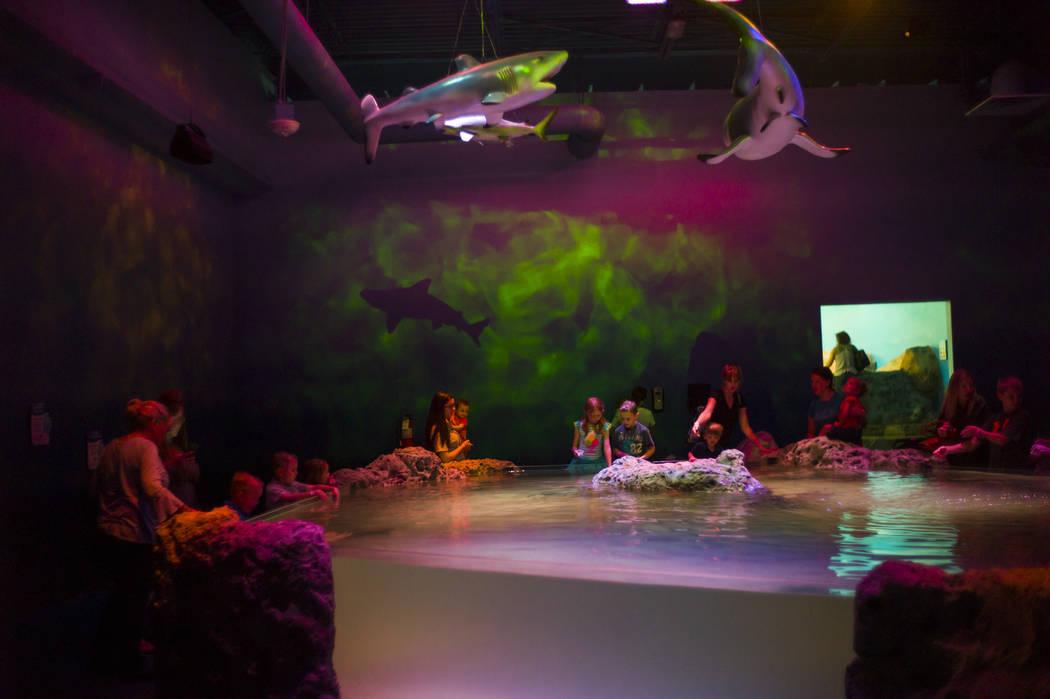 "The ""Shark Lagoon"" area at the SeaQuest Interactive Aquarium at the Boulevard Mall in Las Vegas on Friday, April 14, 2017. (Miranda Alam/Las Vegas Review-Journal) @miranda_alam"