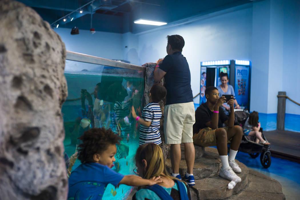 SeaQuest Interactive Aquarium at the Boulevard Mall in Las Vegas on Friday, April 14, 2017. (Miranda Alam/Las Vegas Review-Journal) @miranda_alam