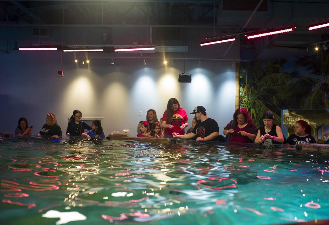 SeaQuest Interactive Aquarium at the Boulevard Mall in Las Vegas on Friday, April 14, 2017. (Miranda Alam Las Vegas Review-Journal) @miranda_alam