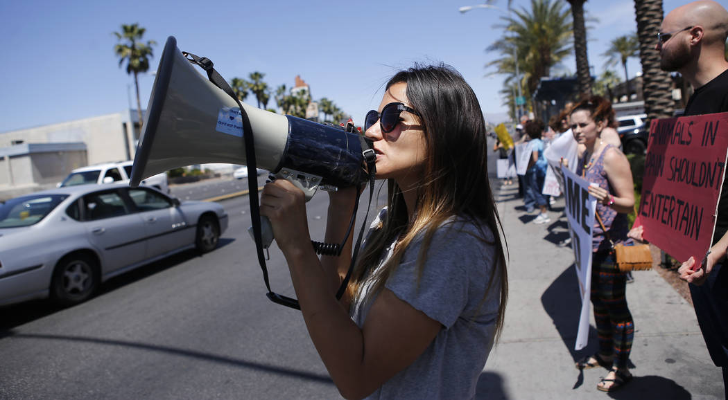 Lizzette Reyes, 34, center, leads a chant against Seaquest Interactive Aquarium at Boulevard Mall on Saturday, April 15, 2017, in Las Vegas. Former and current employees from Seaquest have alleged ...