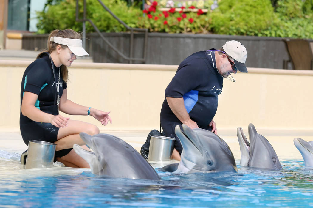Animal care specialists Amanda Meyers, left, and Greg Sabataso feed dolphins at Siegfried & Roy's Secret Garden and Dolphin Habitat at The Mirage in Las Vegas, Monday, April 17, 2017. Elizabet ...