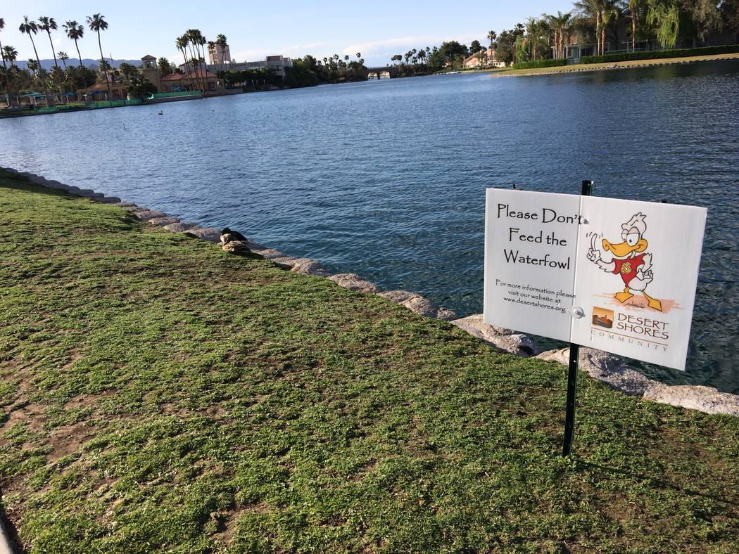 A sign warns pedestrians not to feed the water fowl which require a special diet. One of the black swans was shot with an arrow and it had to be euthanized. PETA is offering a $5,000 reward. The o ...