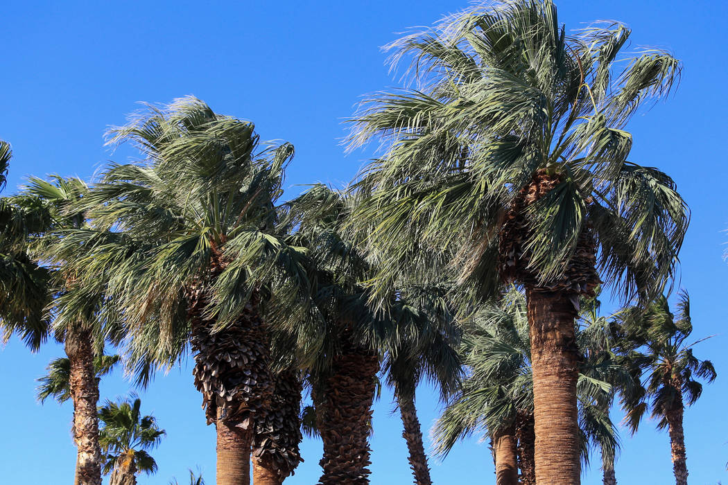 High winds blow through palm trees on Friday, April 21, 2017. Brett Le Blanc Las Vegas Review-Journal @bleblancphoto