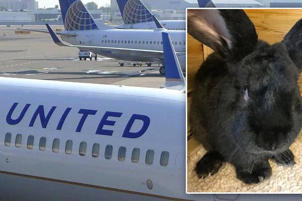 Simon the rabbit. (@NYDailyNews/Twitter)