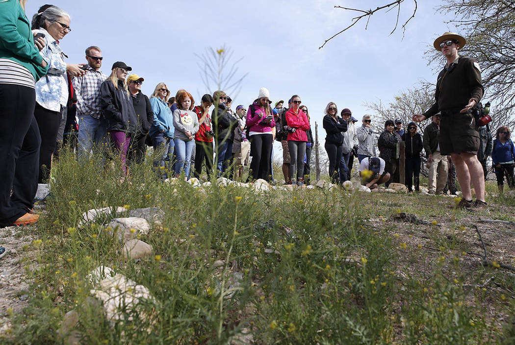 Park Interpreter David Low, right, shows visitors wild radish on a hiking tour that he is leading at the Spring Mountain Ranch State Park on Sunday, April 9, 2017, in Blue Diamond, Nevada. Low exp ...