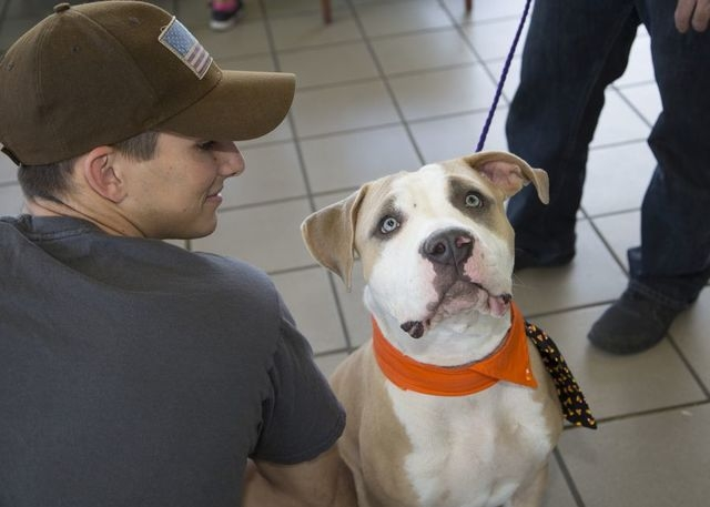 COURTESY One of the many dogs adopted during the 2015 Paws for the Cause is seen at Friendly Ford last year. The event will be presented again May 28 at the dealership beginning at 11 a.m.