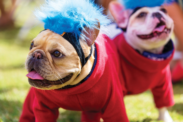 A Halloween costume contest for dogs is just one of the events for all ages today during the Lake Las Vegas Fall Festival in MonteLago Village. (Courtesy)