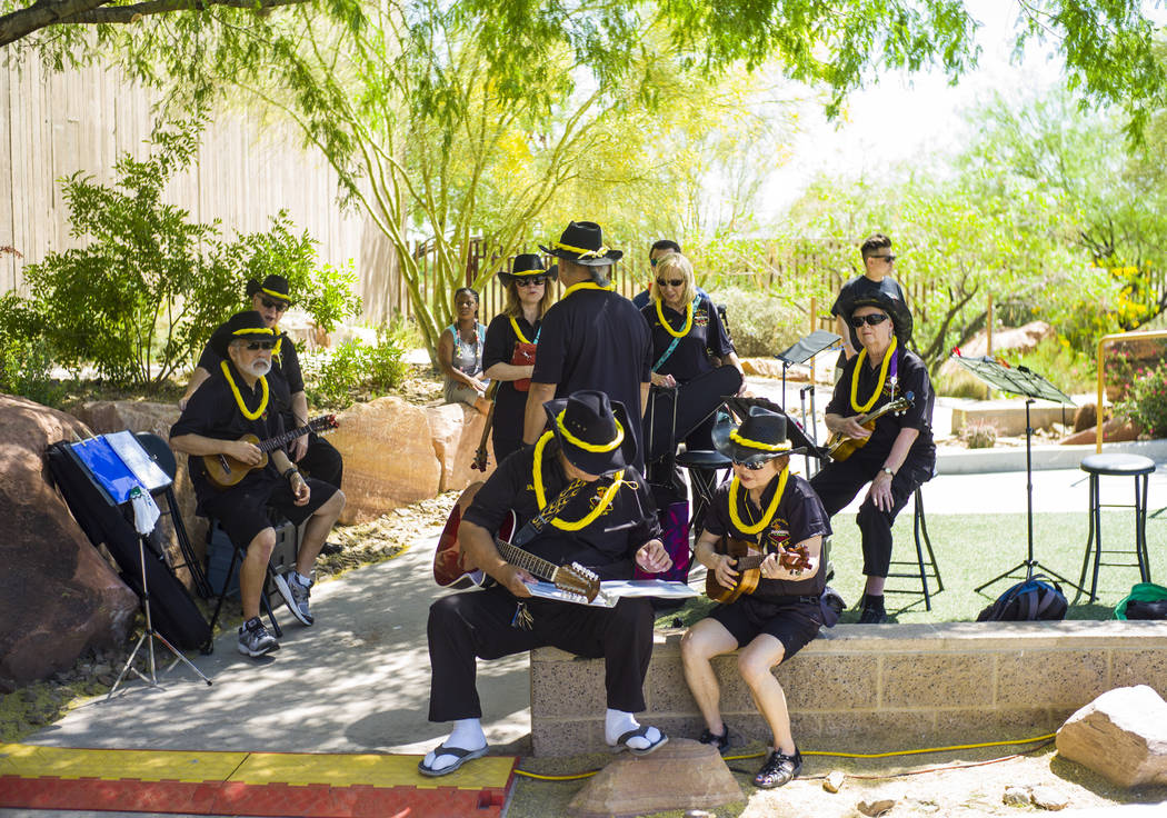 The 9th Isle Serenaders prepare to perform at the 'Ohana Festival, celebrating Pacific Islander and Hawaiian cultures, at the Springs Preserve in Las Vegas on Saturday, May 6, 2017. Chase Stevens  ...