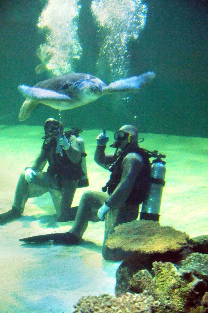 Divers in armored wetsuits at Shark Reef Aquarium at Mandalay Bay.  (Special to View, Bryan Haraway)