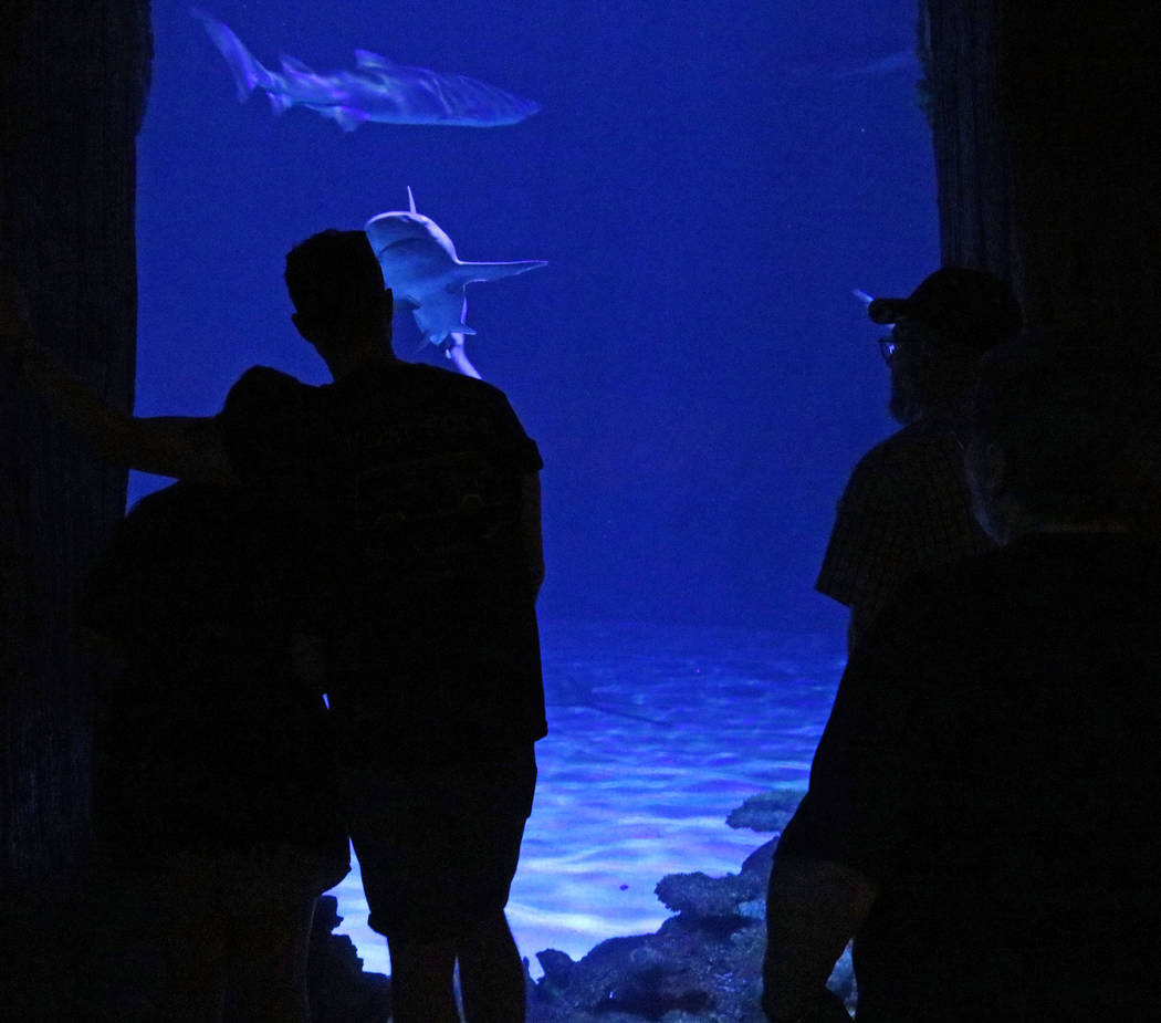 Sharks at Mandalay Bay's Shark Reef Aquarium, Tuesday, May 9, 2017. Gabriella Benavidez Las Vegas Review-Journal @latina_ish