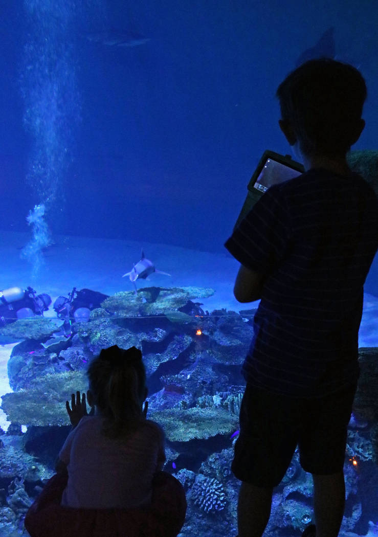 Alice Grady, 3, left, and Andrew Bergeron, 6, watch the divers and sharks at Mandalay Bay's Shark Reef Aquarium, Tuesday, May 9, 2017. (Gabriella Benavidez/Las Vegas Review-Journal) @latina_ish