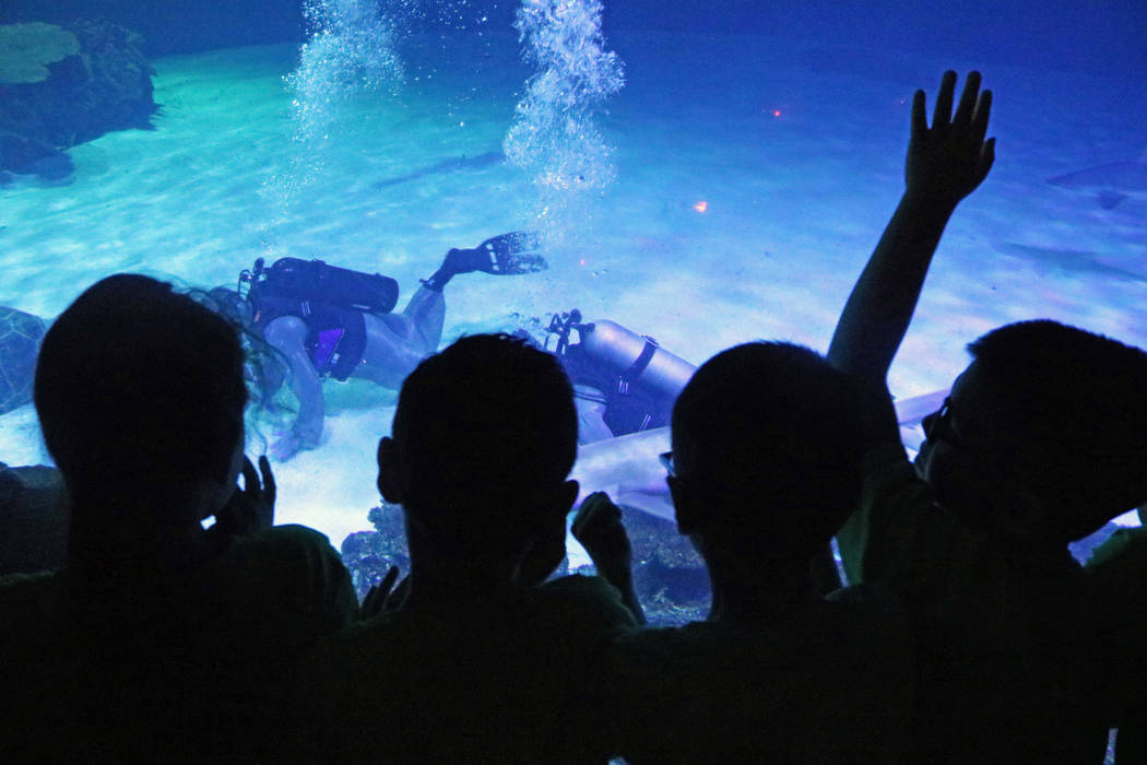Students from C.P. Squires Elementary School watch the divers collect shark teeth at Mandalay Bay's Shark Reef Aquarium, Tuesday, May 9, 2017. (Gabriella Benavidez/Las Vegas Review-Journal) @latin ...