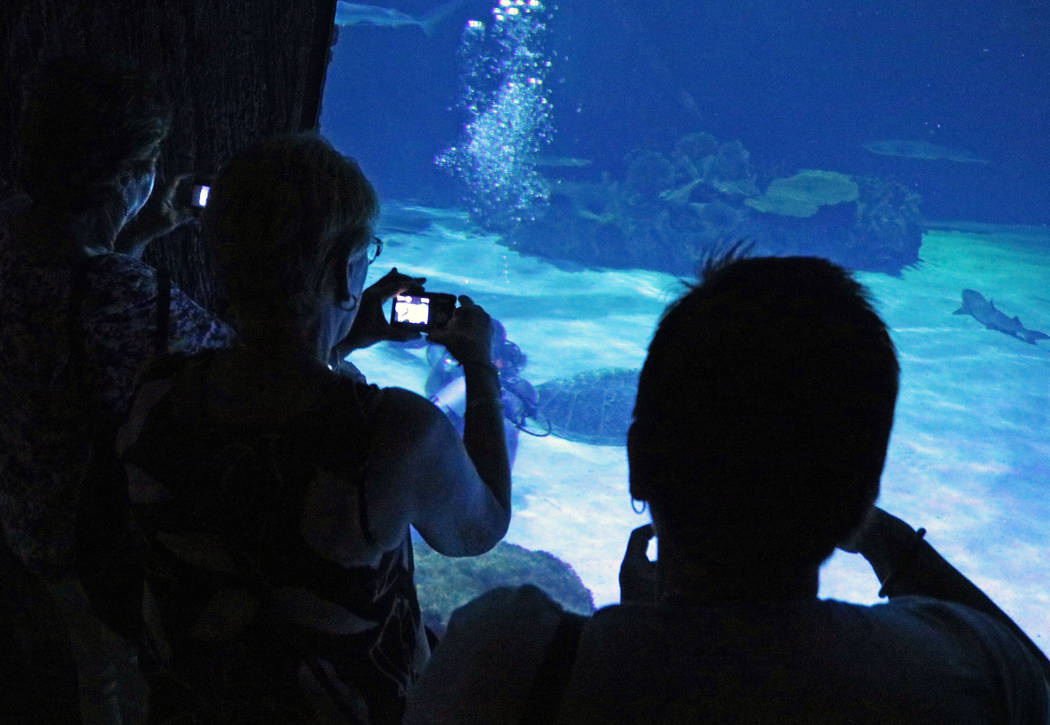 Sharks and divers at Mandalay Bay's Shark Reef Aquarium, Tuesday, May 9, 2017. (Gabriella Benavidez/Las Vegas Review-Journal) @latina_ish