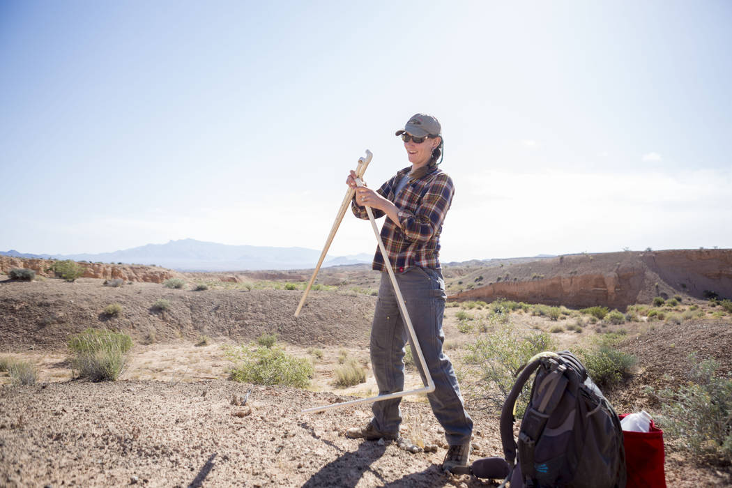 UNLV restoration ecologist Lindsay Chiquoine checks on a research site at the northern end of Lake Mead National Recreation Area, Tuesday, May 9, 2017. Elizabeth Brumley Las Vegas Review-Journal