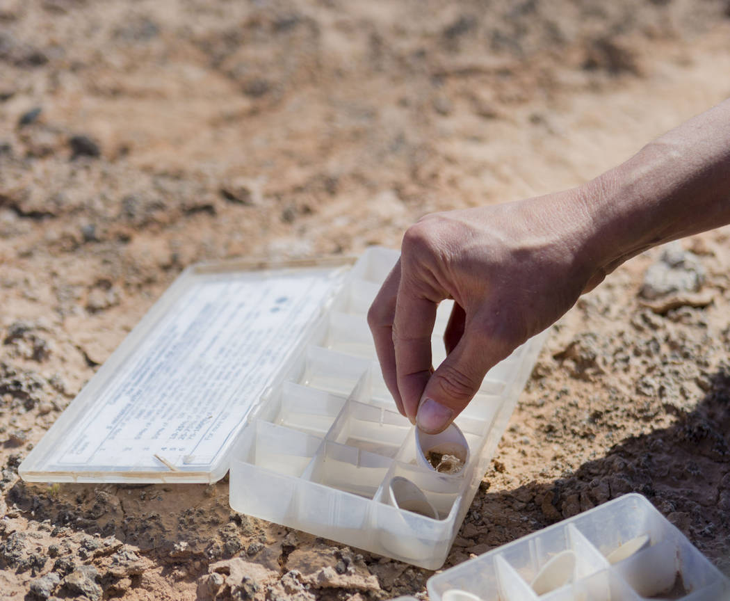 UNLV restoration ecologist Lindsay Chiquoine tests crust from a research site at the northern end of Lake Mead National Recreation Area, Tuesday, May 9, 2017. Elizabeth Brumley Las Vegas Review-Jo ...