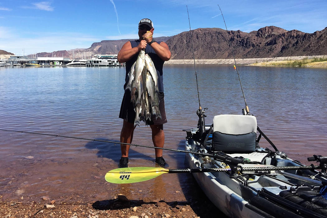 Rick Welter caught this mess of striped bass while fishing anchovies and a Sexy Shad swimbait from his new Big Rig from Jackson Kayak. At 38 inches wide, this kayak provides a stable platform for  ...