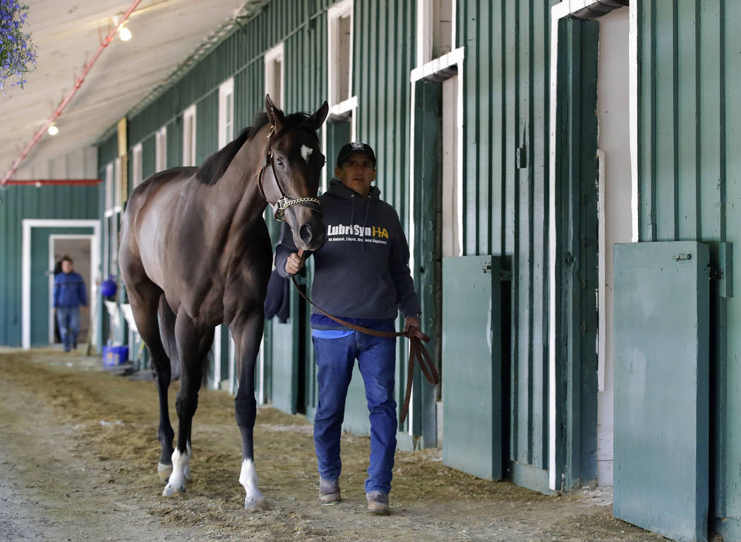 Kentucky Derby winner Always Dreaming walks alongside a groom in a barn at Pimlico Race Course in Baltimore, Tuesday, May 9, 2017. The Preakness Stakes horse race is scheduled to take place May 20 ...