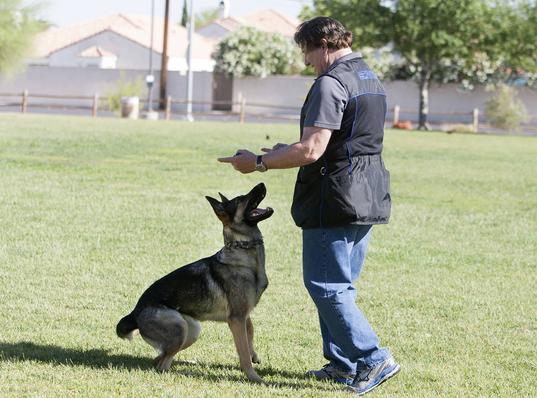 Dog trainer David Rivisto demonstrates how he trains his dog, Arletta, at Wayne Bunker Park on May 12, 2017, in Las Vegas. Bizuayehu Tesfaye Las Vegas Review-Journal @bizutesfaye