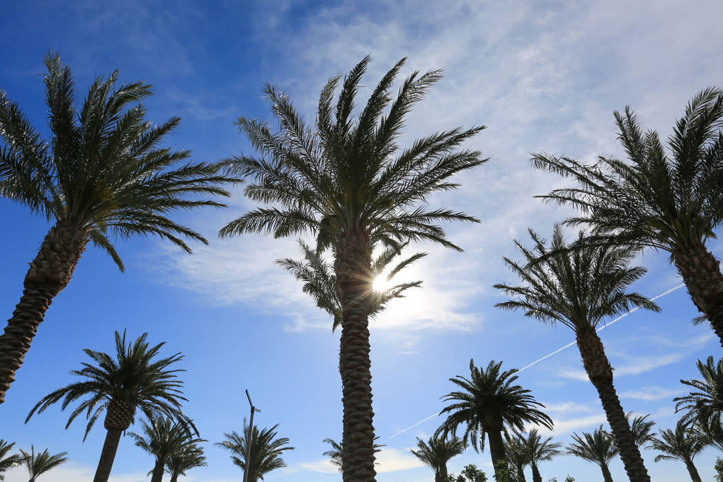 Palm trees blow in the wind at Downtown Summerlin in Las Vegas on Thursday, April 27, 2017. (Brett Le Blanc/Las Vegas Review-Journal) @bleblancphoto