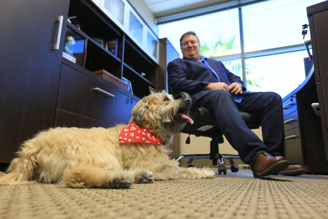 Sadie, a 9-year-old Wheaten Terrier, who has to approve all hires at Goettl Air Conditioning, lies near Ken Goodrich, 55, the CEO of Geottl Air Conditioning, in his office on Friday, May 19, 2017, ...