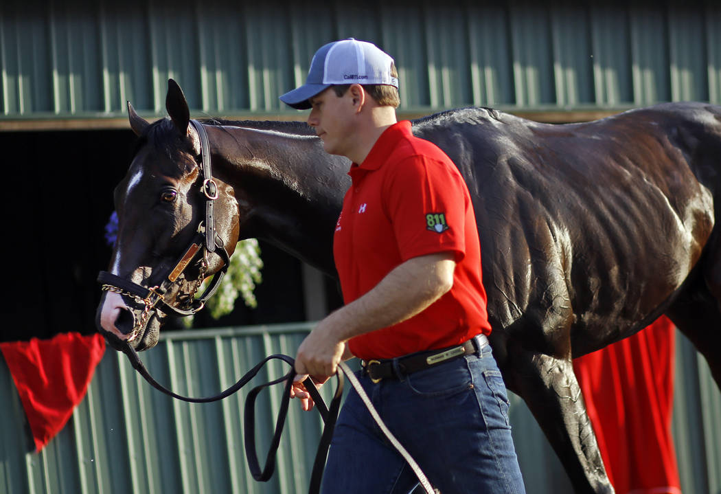 Assistant trainer Norman Casse leads Preakness contender Classic Empire to his barn after a workout at Pimlico Race Course in Baltimore, Thursday, May 18, 2017. The Preakness Stakes horse race is  ...