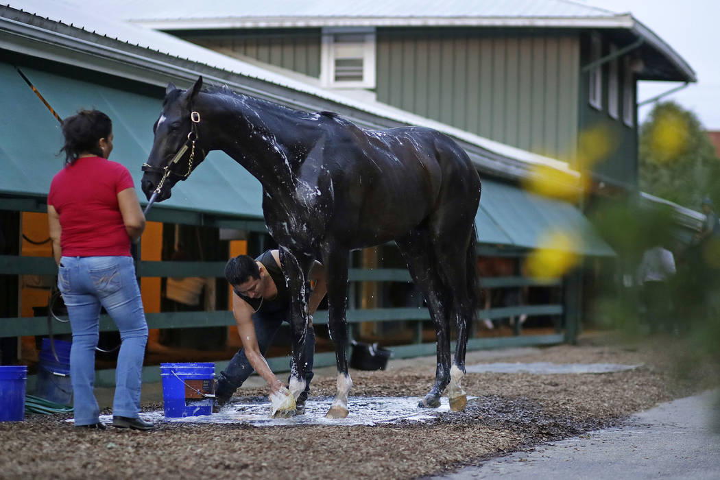 Kentucky Derby winner Always Dreaming is washed after a workout at Pimlico Race Course in Baltimore, Thursday, May 18, 2017. The Preakness Stakes horse race is scheduled to take place May 20. (AP  ...