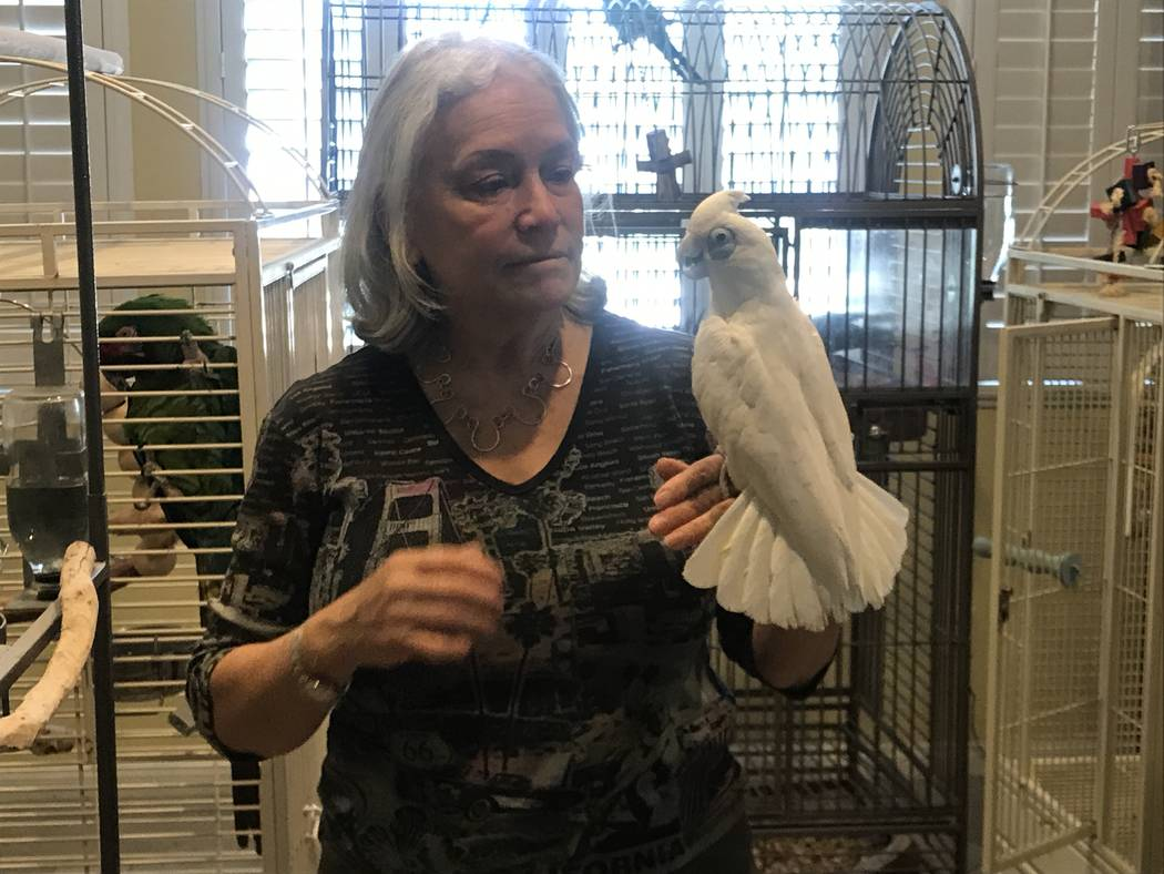 Madeleine Franco, founder and president of SNPERRS, with one of her parrots May 15 at her Summerlin home. (Kailyn Brown/View)