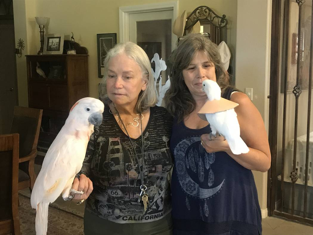 Madeleine Franco, founder and president of SNPERRS, and re-homing director Belinda Hutchings, playing with one of her parrots May 15 at her Summerlin home. (Kailyn Brown/View)