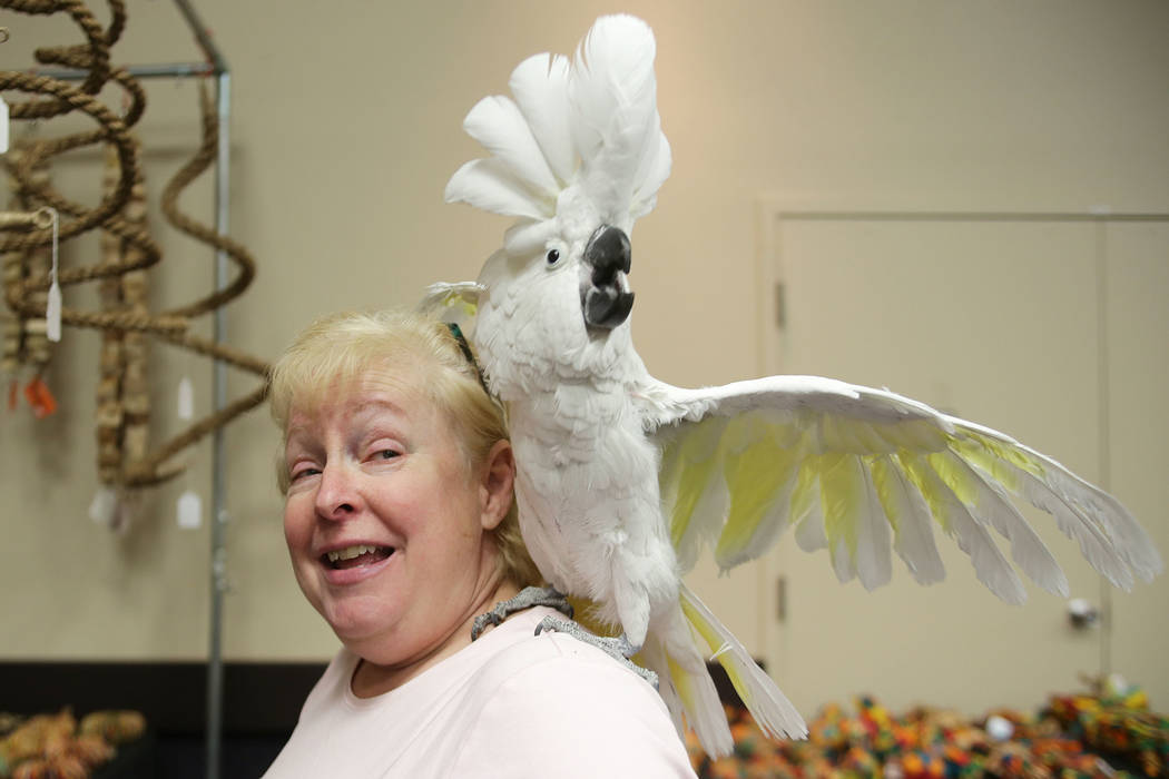 Beth Bryant holds her bird Shadow on Sunday, May 21, 2017, at the Bird Mart Show hosted by the Las Vegas Avicultural Society at the Henderson Convention Center in Henderson. Rachel Aston Las Vegas ...