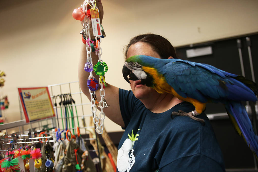 Skye Marsh shows her bird Radar a toy as she shops on Sunday, May 21, 2017, at the Bird Mart Show hosted by the Las Vegas Avicultural Society at the Henderson Convention Center in Henderson. Rache ...