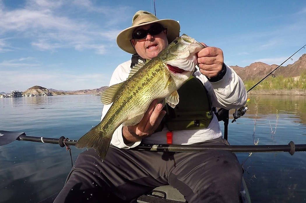 Kayak stealth and a spinnerbait helped outdoors writer Doug Nielsen catch and release this, his largest largemouth bass to date, while fishing a shallow brush-covered flat. (Doug Nielsen/Special t ...