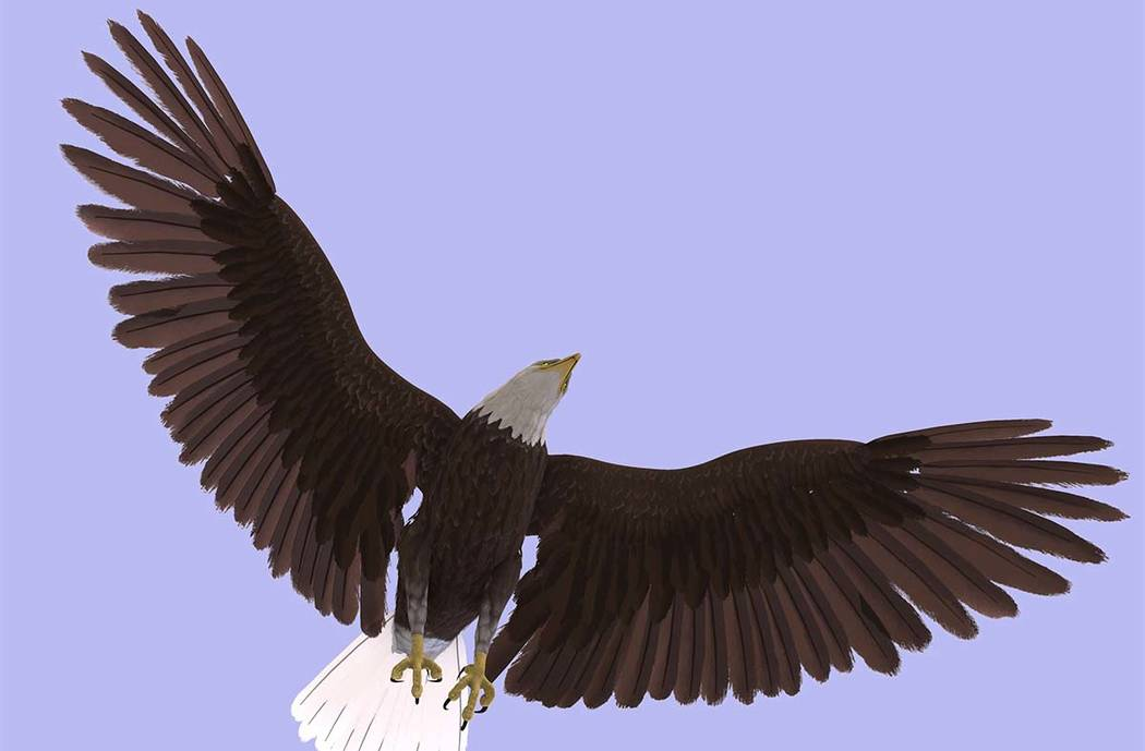 A bald eagle in flight. (Thinkstock)
