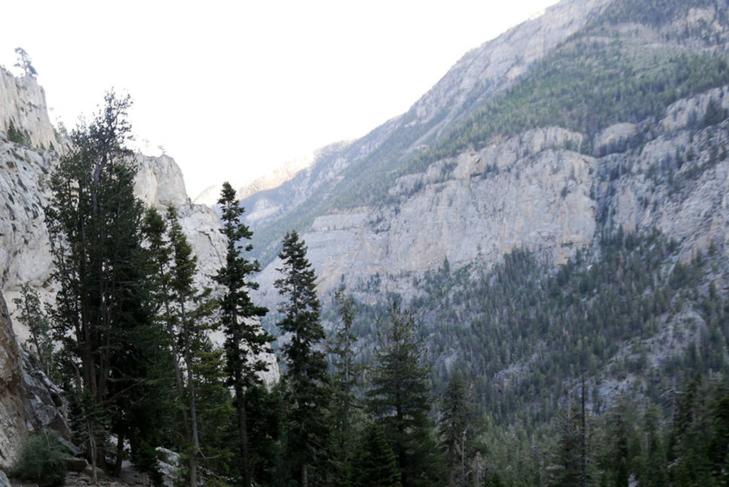 View from Mary Jane Falls trail on Mount Charleston (Las Vegas Review-Journal)