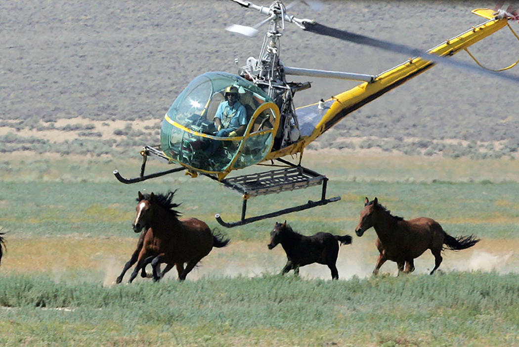 A livestock helicopter pilot rounds up wild horses from the Fox & Lake Herd Management Area from the range in Washoe County in 2008. (AP Photo/Brad Horn, File)